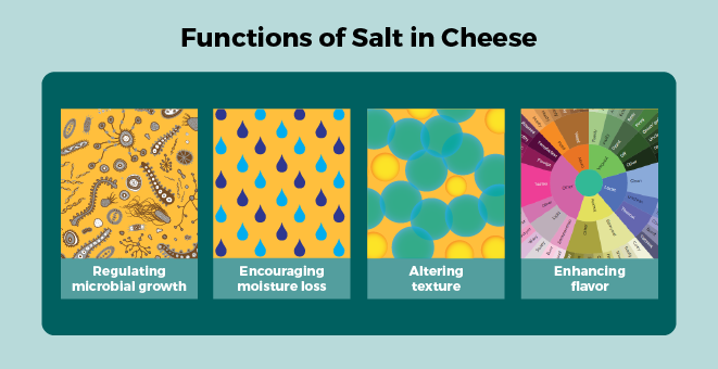 Functions of salt in cheese